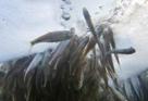 Рыбы. Как помочь рыбам зимой - 10
