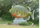 Рыбы. Как помочь рыбам зимой - 7