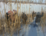 Рыбы. Как помочь рыбам зимой - 16