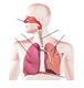 Органы дыхания 2.PNG