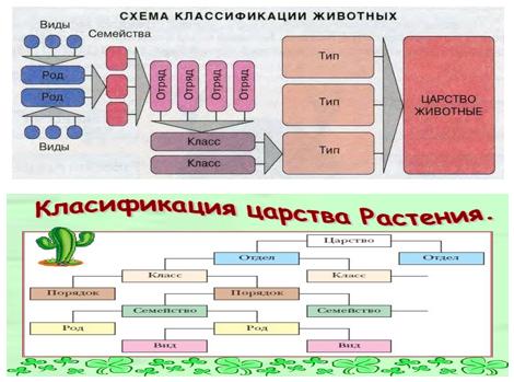 kasenova_gruppy_4.png